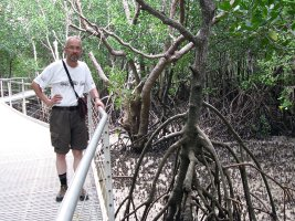 Darwin: Mangrove Boardwalk