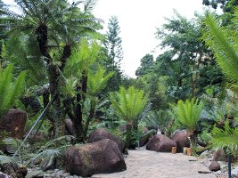 Singapore Botanic Gardens: Evolution Garden